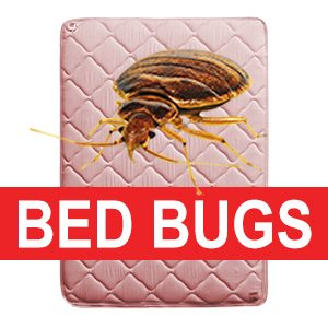 Recycle Bed Bug Invested Mattress